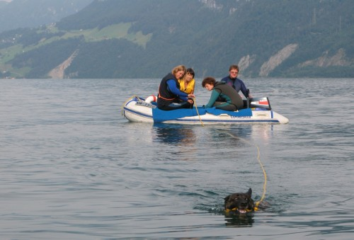 Jaws of life: A rescue dog pulls a boat with her teeth.