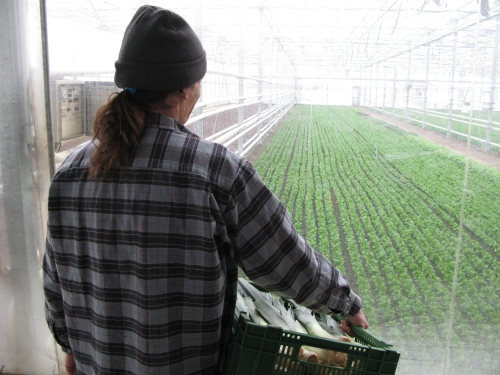 In winter, Joseph keeps busy inside the prison's greenhouse. (© SVM, swissinfo)